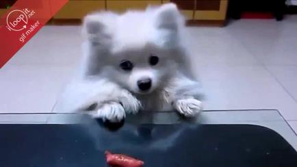 Doggy wants a fish. Can you just give it ? gif